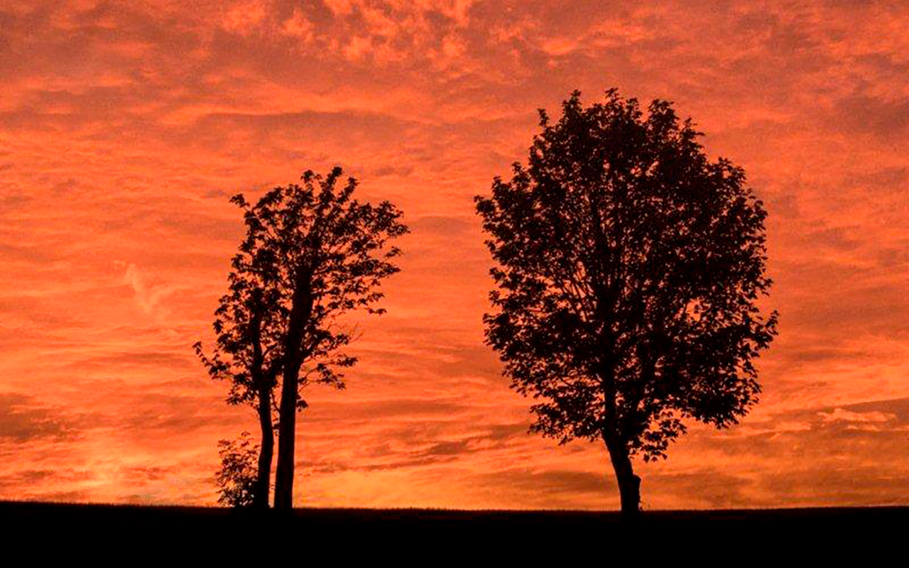 red sky & two trees