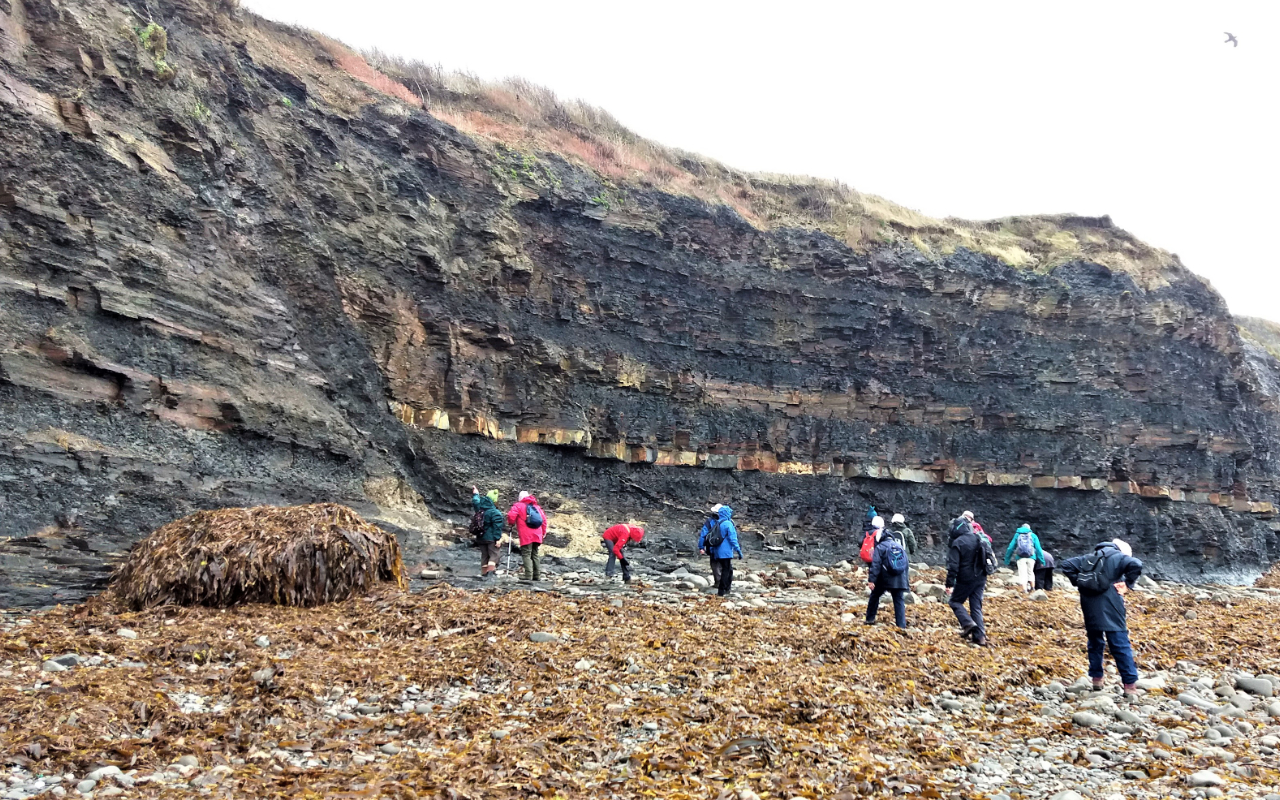 Fault in the cliffs, Kimmeridge [W]