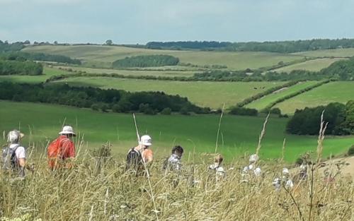 Friday Walkers crossing a field