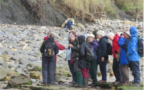 Geology Group - Ammonite Hunting at Lyme Regis