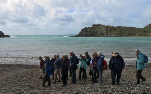 Geology Group - Kimmeridge Bay