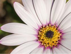 Garden Flowers Macro