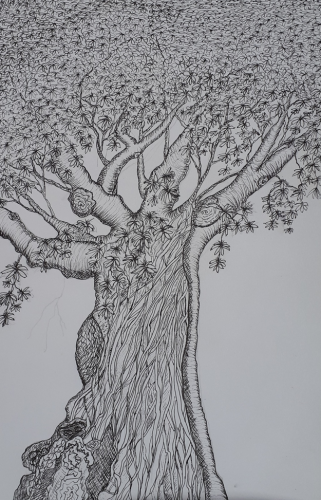 Chestnut Tree in Hillworth Park