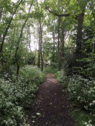 Broadleas Woods 2 - PG