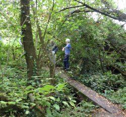 Hidden Bridge, Foxhangers by Vicki